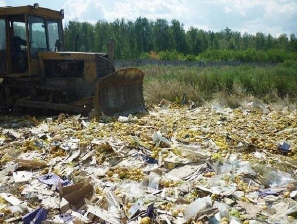 ВРостовской области уничтожили 1,7т груш изЛитвы