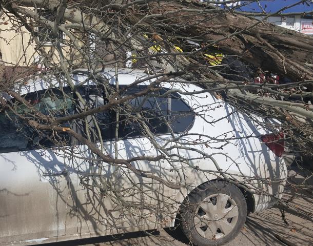 Ростовчан предупреждают о резком усилении ветра