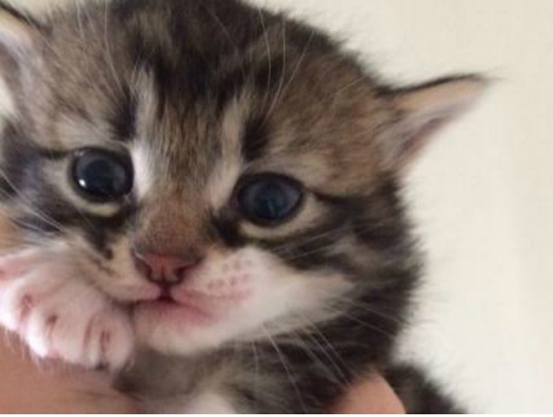 Жуткую расправу над новорожденными котятами учинили живодеры в Ростовской области
