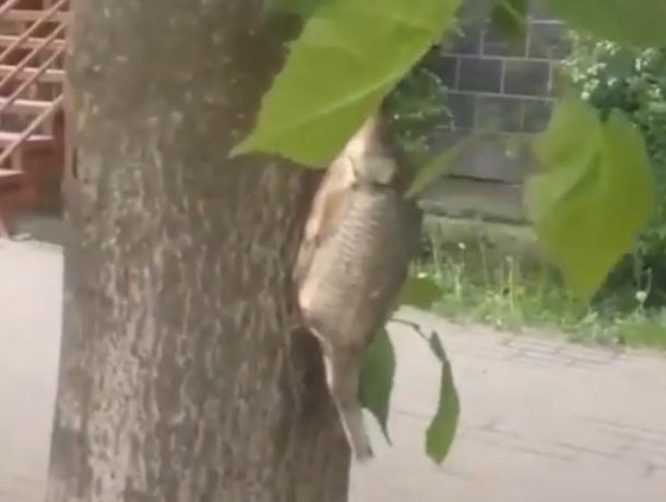 Рыбное дерево в центре Ростова обнаружили внимательные горожане