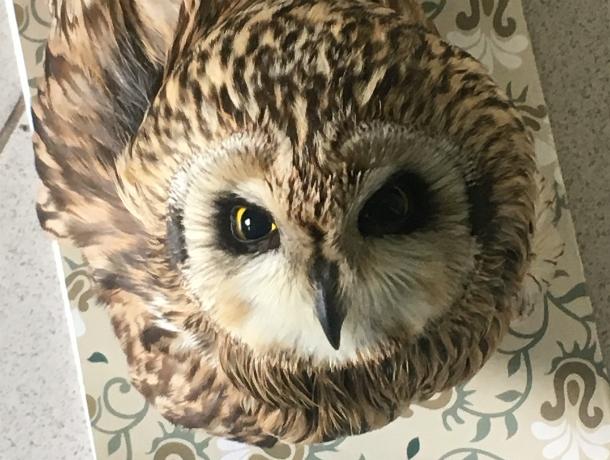 Ампутация крыла или дорогостоящее лечение: что выберут для больной Тюши ростовские орнитологи