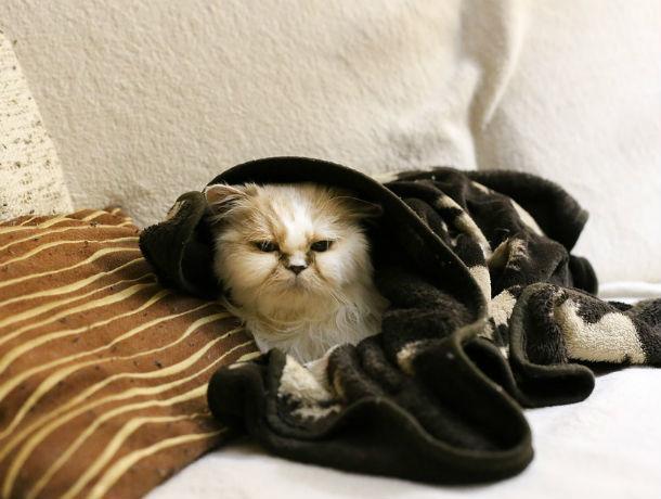 Тепло в квартиры ростовчан придет уже 15 октября