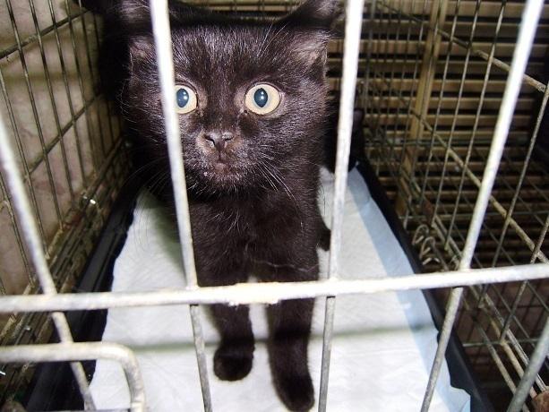Замерзавших в сугробе котят спас от жуткой смерти житель Ростова