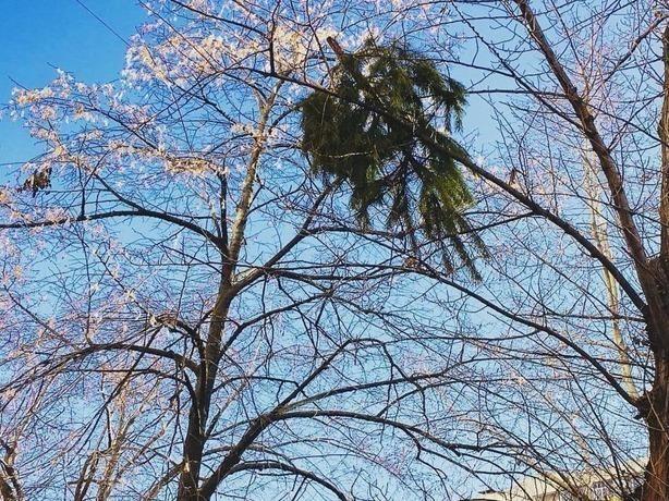 Первые ростовские слабаки выбросили неугодную елку с окна
