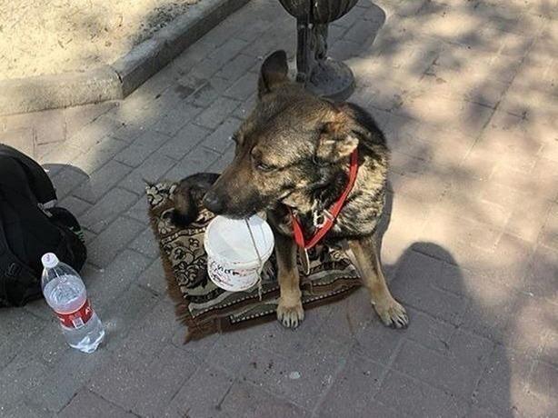 Несчастная собака-попрошайка в Ростове вызвала у прохожих сильное возмущение