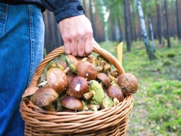 В Ростовской области отравились лесными грибами несколько взрослых и ребенок