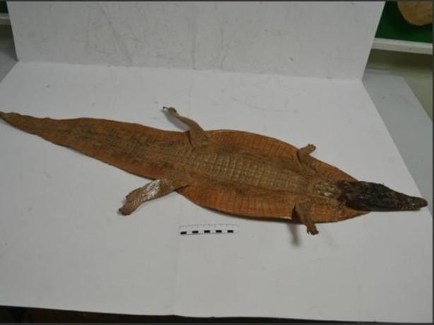 В Ростов-на-Дону прилетели шкуры крокодилов