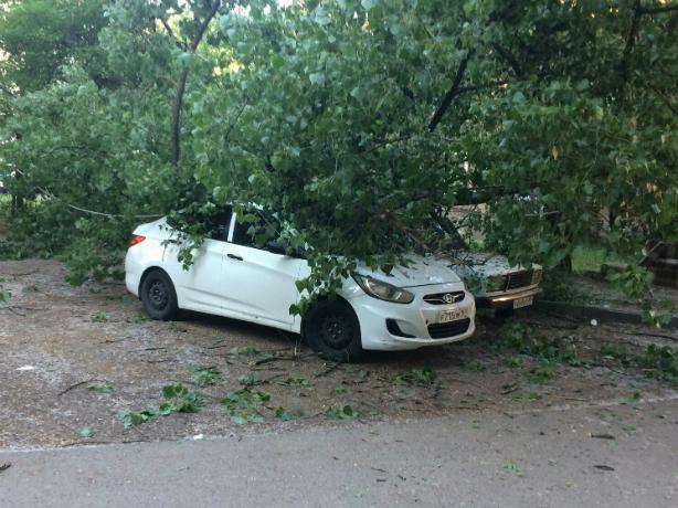 Пустили дымок расстроенные владельцы безжалостно накрытых деревом машин в Ростове