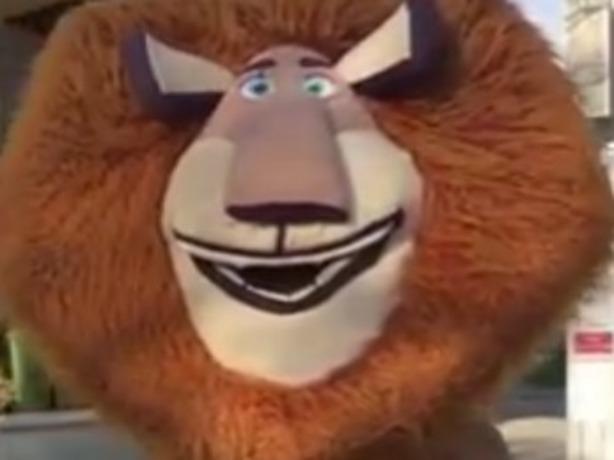 Зажигательный и безбашенный танец рыжего льва Алекса попал на видео в Ростове-на-Дону