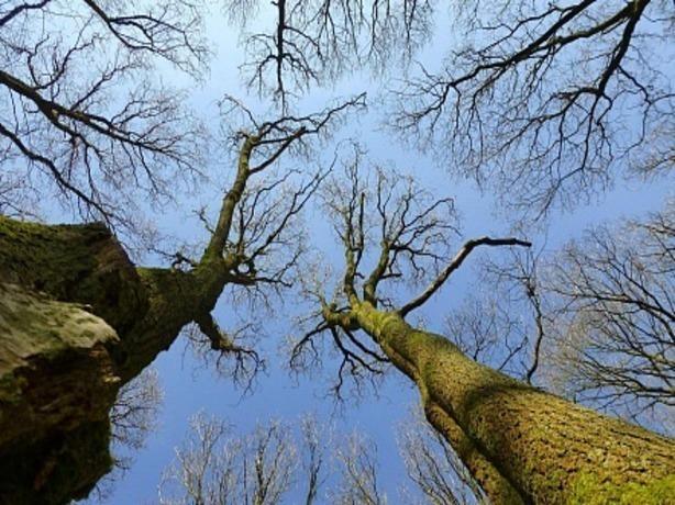 Жителей Ростова приглашают проинспектировать деревья в городе на безобидность