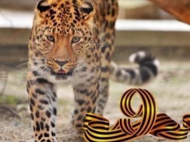 Ростовский зоопарк приглашает 9 мая на праздничную фееричную программу