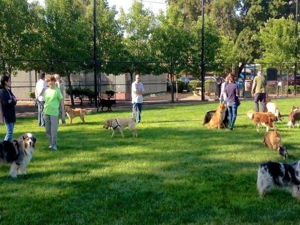 Активист-собаколюб требует создать бесплатные площадки для выгула четвероногих в парках Ростова-на-Дону
