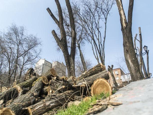 «Городской патруль»: Вростовском парке Островского вырубят 270 деревьев