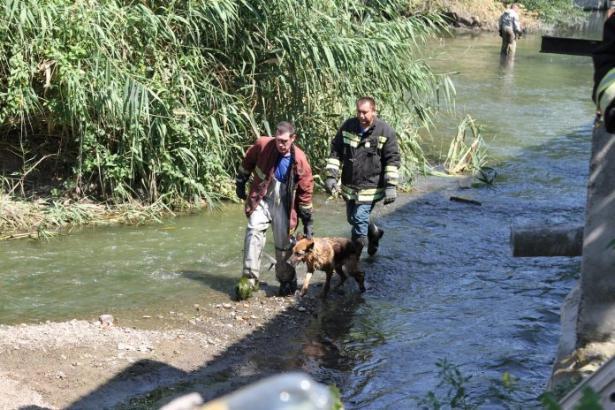Собаку, которая оказалась на небольшом  острове после наводнения, спасли вРостове