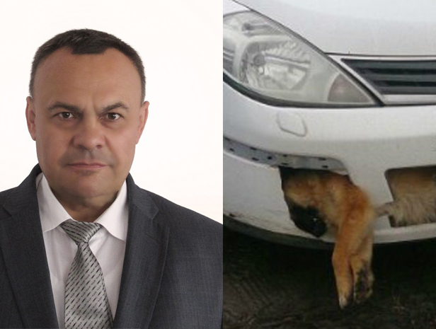 Депутат-единоросс оказался владельцем автомобиля с собакой в бампере из Ростовской области