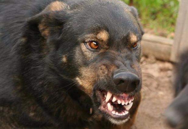 В Орловском районе на пятилетнего мальчика напала бешеная собака, которую спрятали от вакцинации