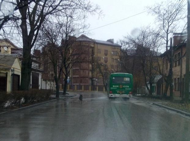 Верная собака пробежала за автобусом с хозяйкой несколько километров в Ростовской области