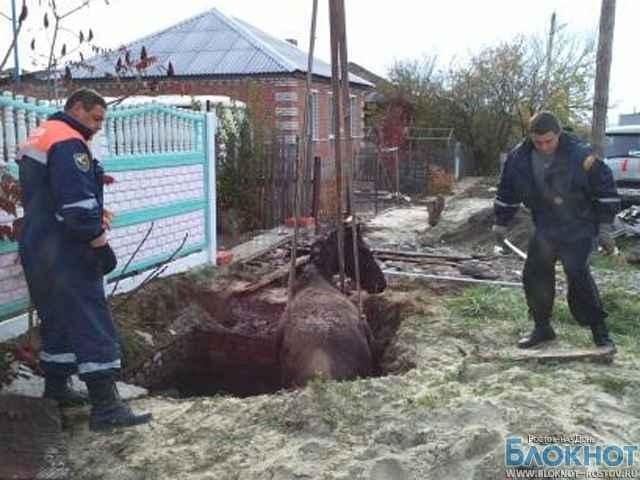В Ростовской области лошадь вытащили из выгребной ямы