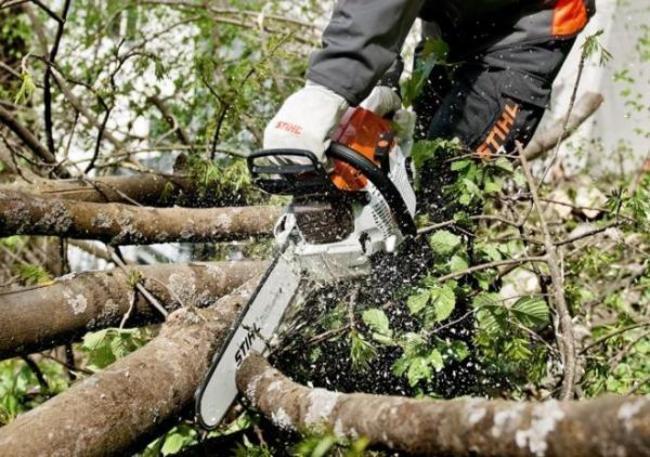 Вырубка деревьев предотвращена вростовском парке «Дружба»