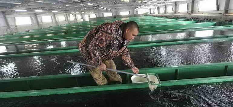 В водоёмы Ростовской области выпустили более 61 млн штук молодых рыб