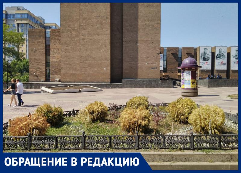 «Они погибают, но никому нет дела!»: ростовчанин просит власти города спасти растения на Пушкинской