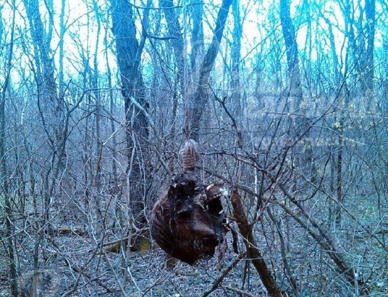 ВРостове-на-Дону обнаружили подвешенную надереве человеческую голову