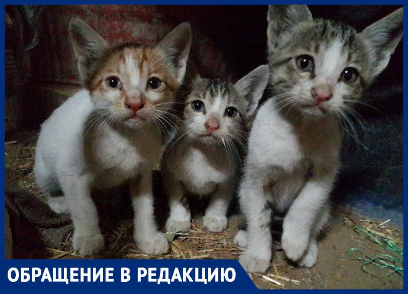 «Вы выбрасываете котят, а их рвут собаки и давят машины»: ростовчанка просит горожан стерилизовать своих животных