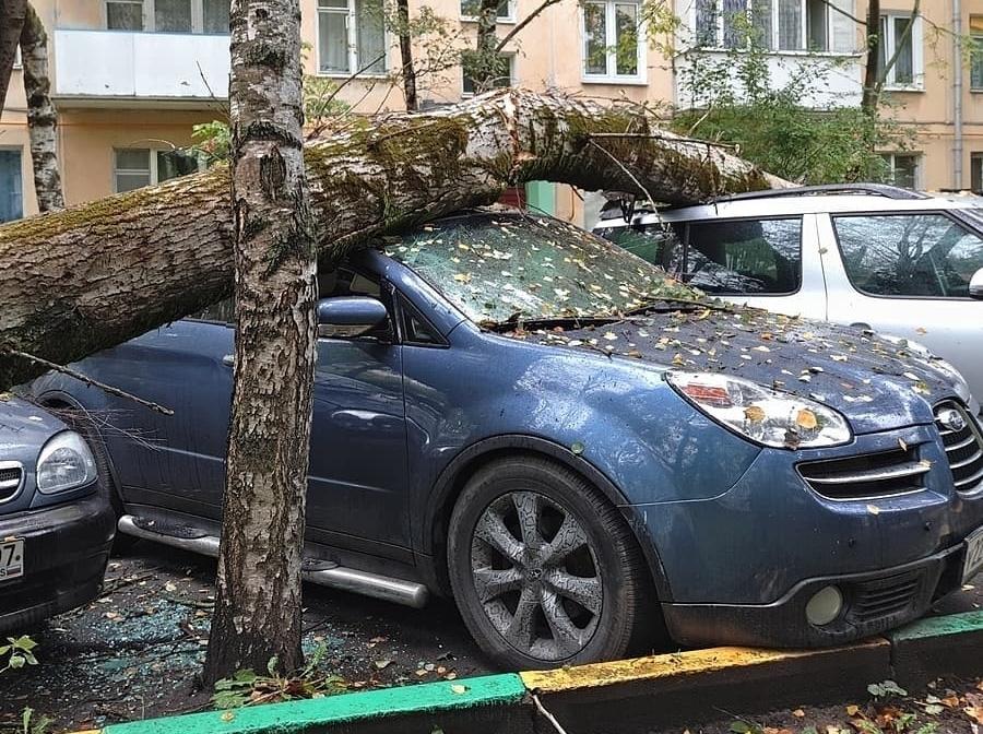 ВРостове старое дерево упало напять автомобилей