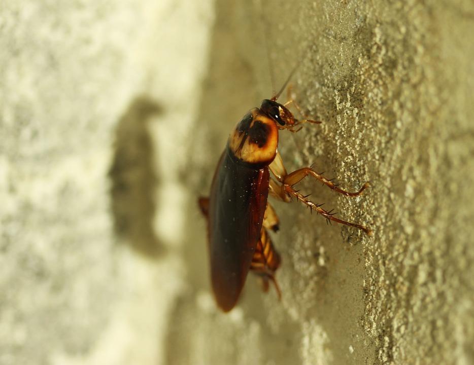 Тараканы в столовой детской областной больницы возмутили ростовчан
