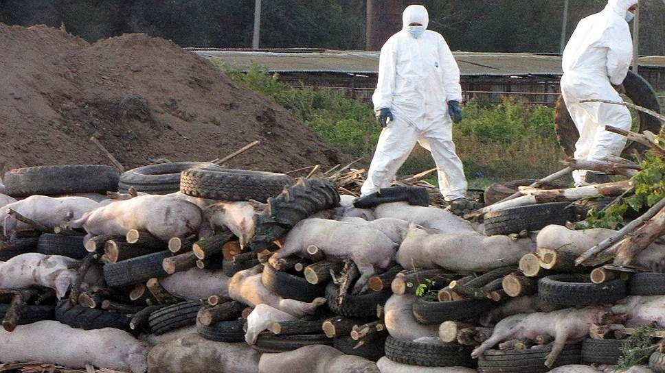 Минобороны изучит причины аномальных эпидемий в Ростовской области