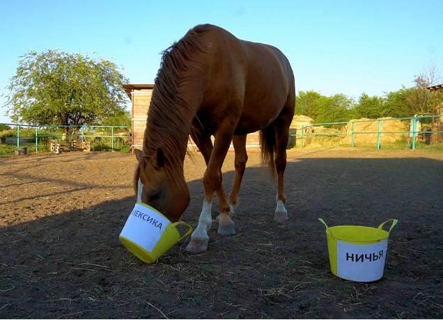 Счастливого победителя матча «Мексика-Южная Корея» определил ростовский конь-оракул