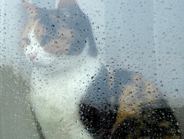 С проливных дождей начнется новая рабочая неделя для жителей Ростова