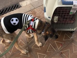 Переживший серьезную болезнь бездомный щенок из Ростова улетел жить в Испанию