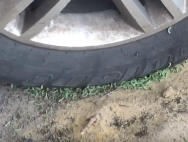 Сжирающие автомобили ростовчан вместе с колесами оголодавшие зеленые черви попали на видео