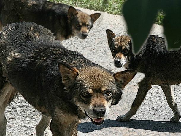 Обходить Вертолетное поле кварталами вынуждают агрессивные собаки жителей Ростова