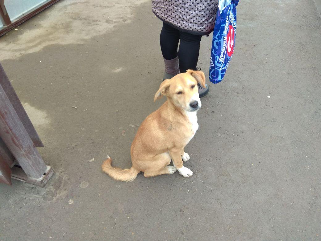 Самых агрессивных бездомных собак приговорили к эвтаназии в Ростове перед ЧМ-2018