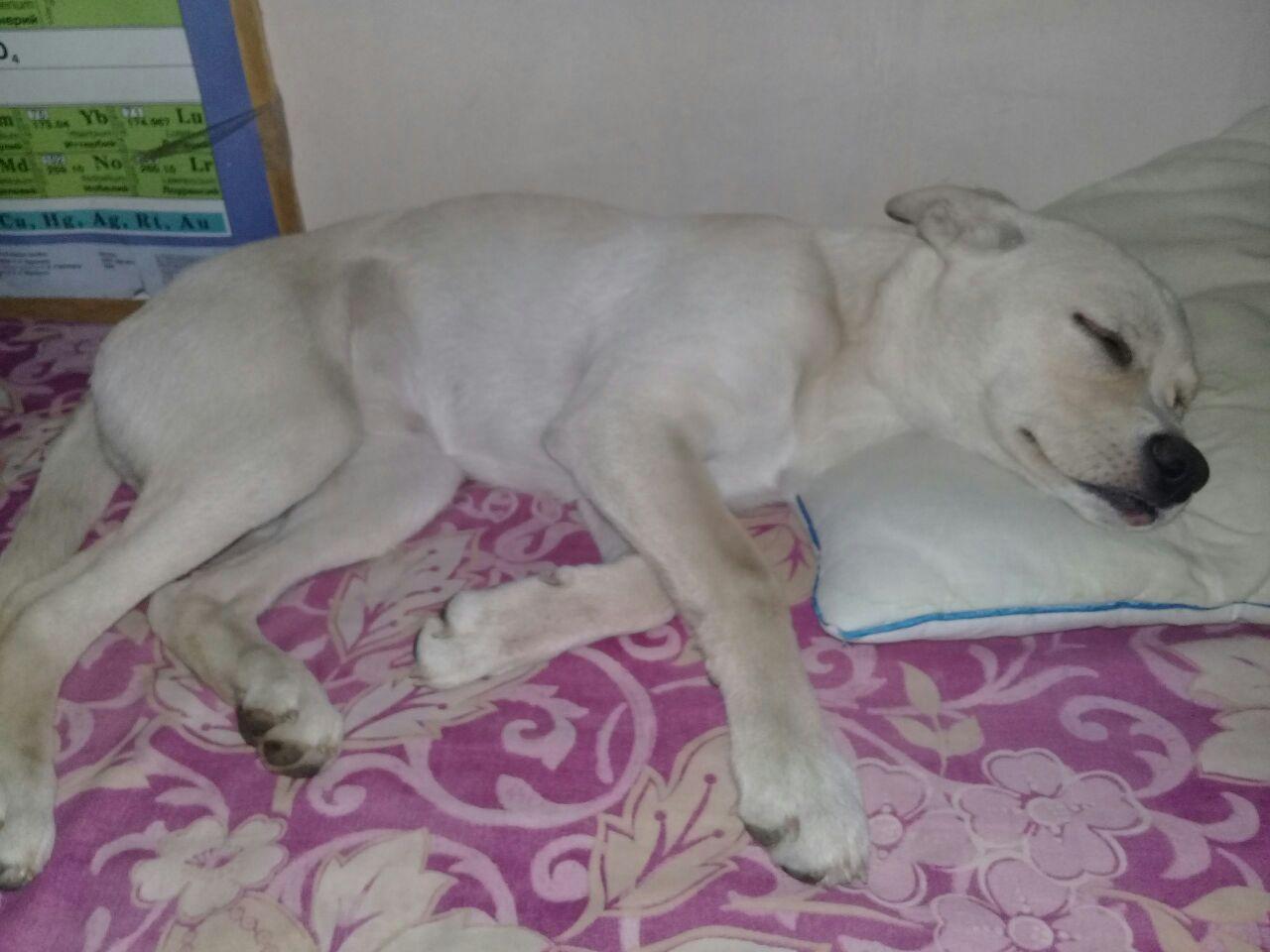 Хозяева сбились с ног в поисках сбитого лихачем щенка в Ростове