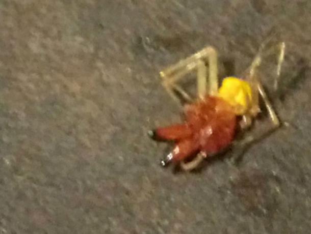 Жуткие ядовитые пауки атаковали Ростовскую область