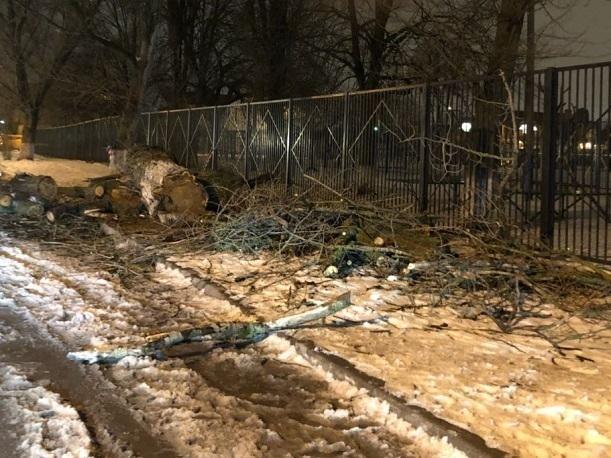 Срубленное дерево преградило путь детям в школу в Ростове-на-Дону