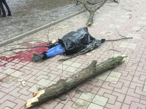 За убитую деревом 21-летнюю ростовчанку никто ответственности не понесет