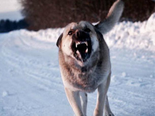 Зараженная бешенством собака бегала по хутору и кусала прохожих в Ростовской области
