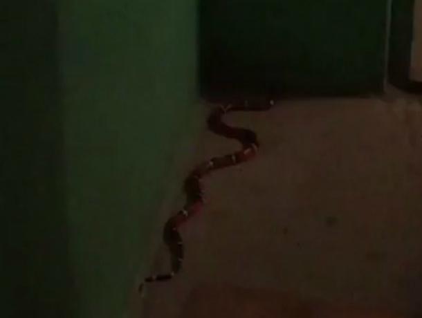Владелец сбежавшего в Ростове гигантского змея ищет пропажу уже неделю