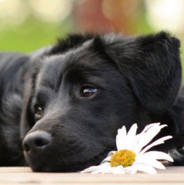 Проект «Собачий патруль» вскоре избавит Ростов от бездомных животных