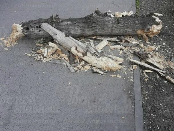 «Стабильно» падающие на головы прохожим ветки заставляют ростовчан бояться улицы