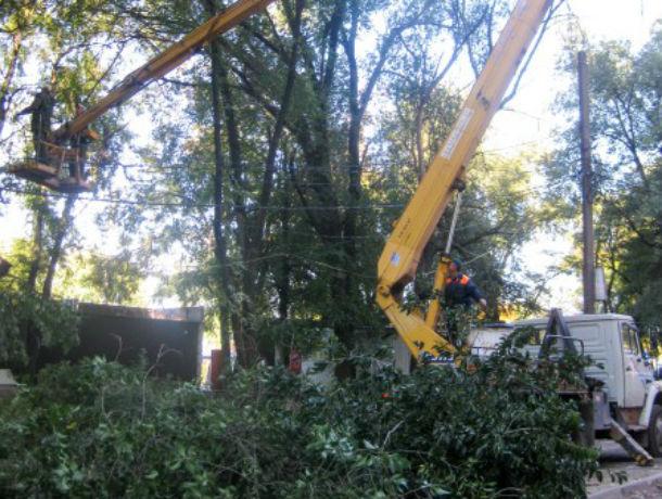 «Кара небесная»: огромные ветки упадут на машины ростовчан, которые оставят авто под деревьями