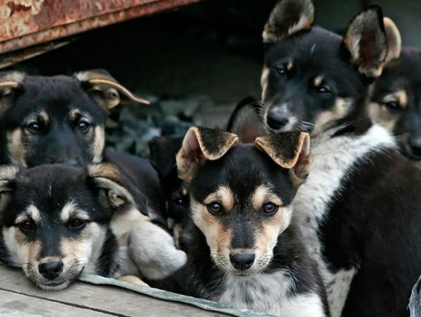 Жестоко убил пятерых щенков мстительный житель Ростовской области