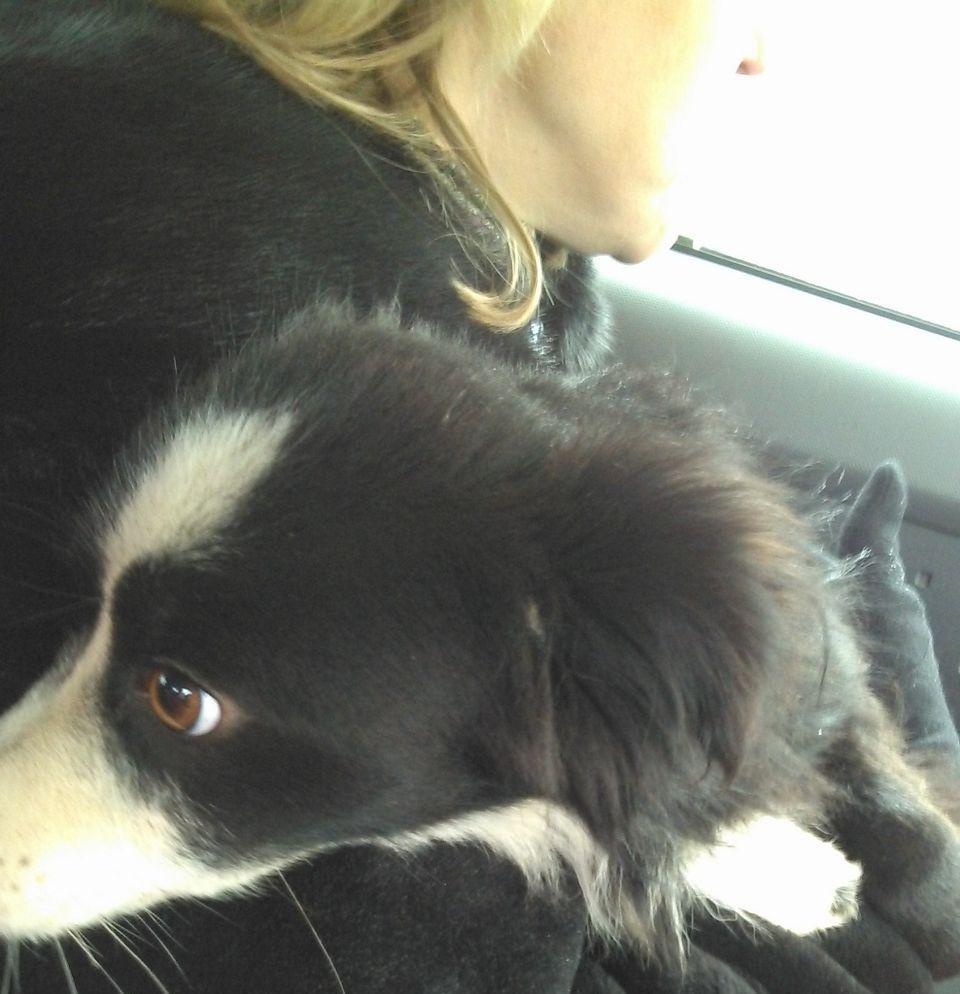 В Батайске нашли собаку, которая была замурована в гараже