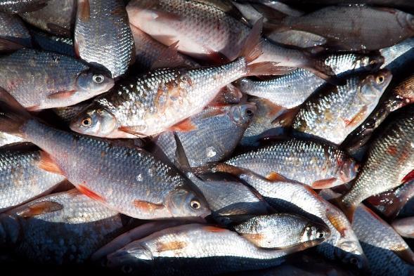 Ростовская область заняла третье место по улову рыбы