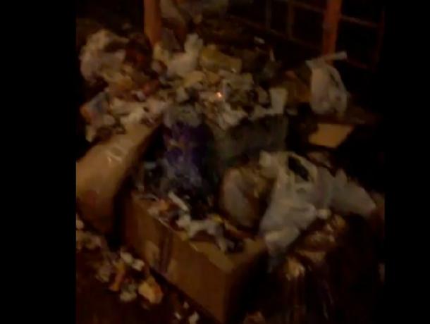 Смирившуюся с гниющим мусором в центре города власть хотят поменять жители Ростова