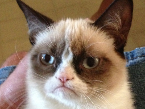 grumpy-cat-definitely-did-not-make-100-million.jpg